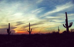 Vintage sunset at Saguaro National Park, Arizona